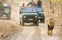 Gir Jungle Trail